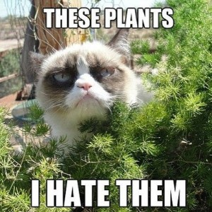 these-plants-i-hate-them-600x600