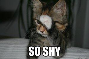 shycat