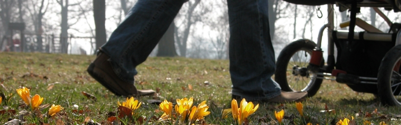 Stroller walking meadow autumn crocus