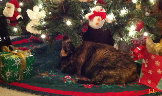 Tortie Tortiseshell cat kitty under tree Christmas