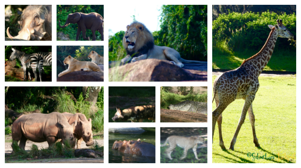 Disney Animal Kingdom Elephant Lion Hippo Giraffe Cheetah Rhino Zebra Jackal Gator Safari